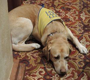 Cathy Vicini's Canine Companion
